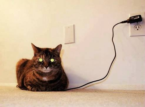 USB-powered cat